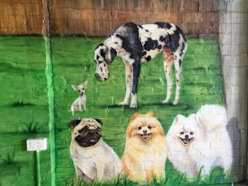 Dogs - Wall Mural